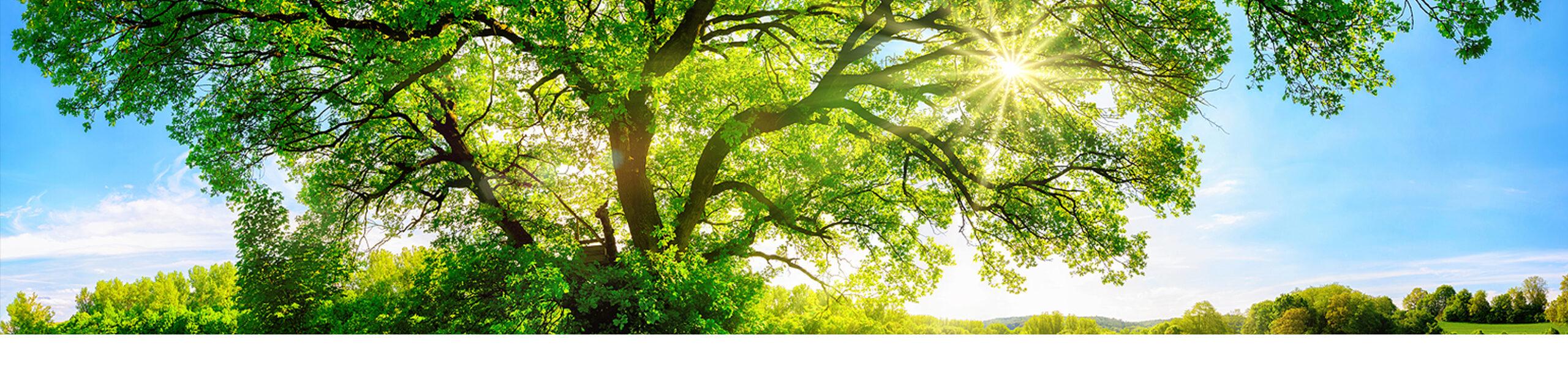 himalayan wellbeing - himalayanwellbeing.co.uk